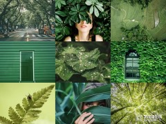 荷兰蔻帝艺术漆:绿色,装修对了竟然可以这么美!